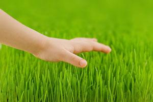 Lawn Fertilization Charlotte NC