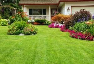 Lawn Care Dunwoody