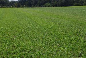 Lawn Aeration Charlotte