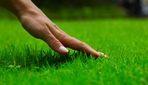 Lawn Care Pineville NC