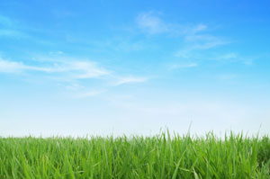 lawn treatment services for charlotte nc area homes and businesses - Lawn Treatment